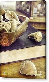 Seashells Acrylic Print by HD Connelly