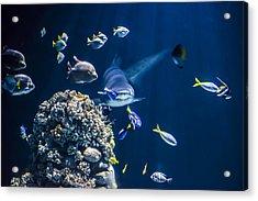 Shark Hunting Acrylic Print by Jaroslaw Grudzinski