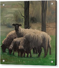 Sheep Family Acrylic Print by John Reynolds