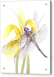 Sheer Wings / Sold Acrylic Print