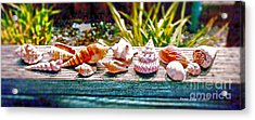 Shell Collection Acrylic Print