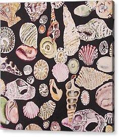 Shells By C . 1.3 Acrylic Print by Cheryl Miller