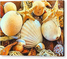 Shells Acrylic Print by Denise Darby