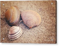 Shells  Acrylic Print by LHJB Photography