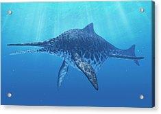 Shonisaurus Marine Reptile Acrylic Print