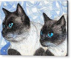 Siamese Cats Acrylic Print