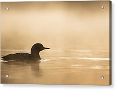 Silhouette In Gold Acrylic Print by Tim Grams