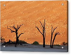 Silhouette Of Dead Tree Against Sand Acrylic Print by Jaynes Gallery
