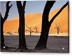 Silhouette Of Dead Tree And Sand Dunes Acrylic Print by Jaynes Gallery