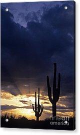 Silhouetted Saguaro Cactus Sunset At Dusk Arizona State Usa Acrylic Print