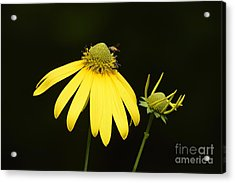 Simple Things Acrylic Print by Randy Bodkins