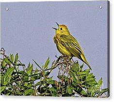 Singing Acrylic Print