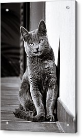 Smiling Cat Acrylic Print by Tetyana Kokhanets
