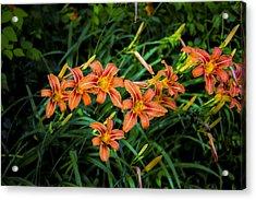 Smokey Mountain Flowers Acrylic Print by Russ Burch