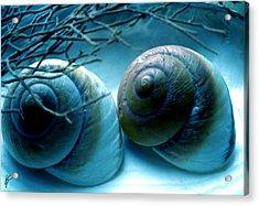 Snail Joy  Acrylic Print