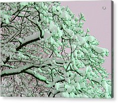 Snow Blossoms Acrylic Print by Judy Via-Wolff