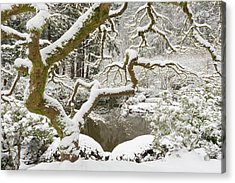 Snow-covered Japanese Maple, Portland Acrylic Print by William Sutton