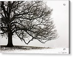 Snow Tree 2010 Acrylic Print