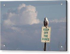 Snowy Owl Hampton Bays New York Acrylic Print