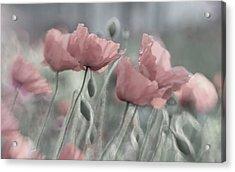 Softly Acrylic Print by Anne Worner