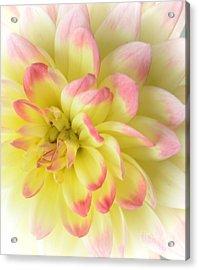 Softness Acrylic Print by Kathleen Struckle