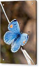 Acrylic Print featuring the photograph Sonoran Blue by Jim Thompson