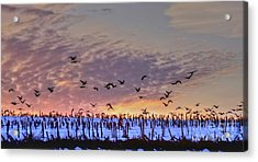 Southbound Acrylic Print by Steve Ratliff