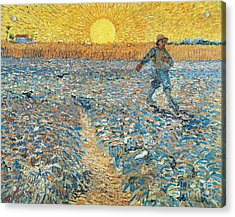 Sower Acrylic Print by Vincent van Gogh