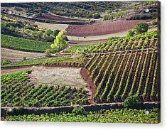 Spain, La Rioja Region, La Rioja Acrylic Print