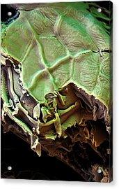Spanish Moss Leaf Acrylic Print by Stefan Diller