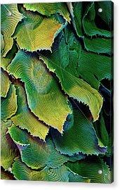 Spanish Moss Leaves Acrylic Print