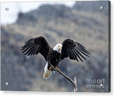 Spread Your Wings Acrylic Print by Mike Dawson