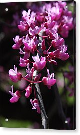 Acrylic Print featuring the photograph Spring Colors by Vadim Levin