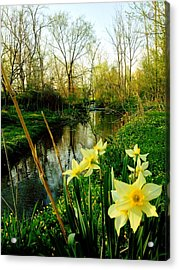 Spring In Prospect Acrylic Print by Andrew Martin