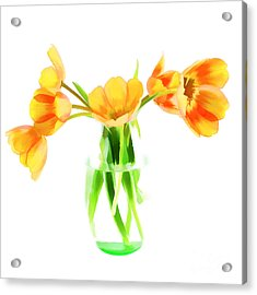 Spring Tulips Acrylic Print by Darren Fisher