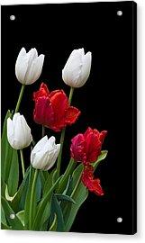 Spring Tulips Acrylic Print by Jane McIlroy