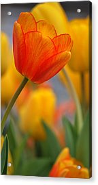 Standing Out Acrylic Print by Amee Cave