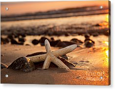 Starfish On The Beach At Sunset Acrylic Print