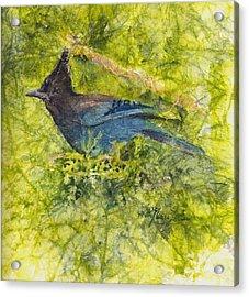 Stellar Jay Acrylic Print by Ruth Glenn Little