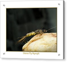 Stone Fly Nymph Acrylic Print by Neal Blizzard