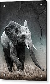 Acrylic Print featuring the photograph Stone Texture Elephant by Mike Gaudaur