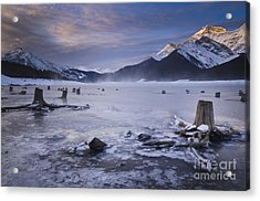 Stumps At Spray Lakes Acrylic Print by Ginevre Smith