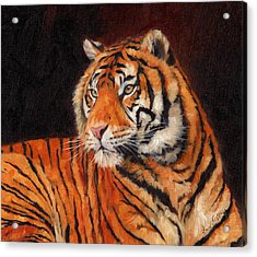 Sumatran Tiger  Acrylic Print by David Stribbling