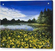Summer Susans Acrylic Print