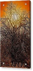 Sunburst Tree  Acrylic Print