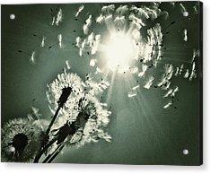 Sundance Acrylic Print by Marianna Mills