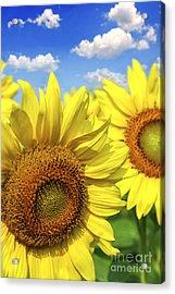 Sunflowers Acrylic Print by Elena Elisseeva
