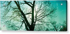Sunlight Shining Through A Bare Tree Acrylic Print by Panoramic Images