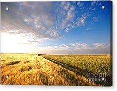 Sunset Field Acrylic Print by Michal Bednarek