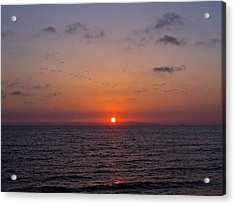 Sunset Flight Acrylic Print by Rita Mueller